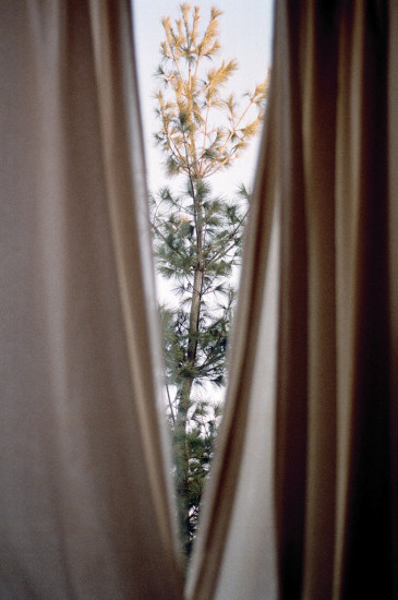 window tree ebb